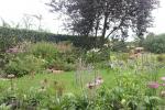 Prairiebeplanting
