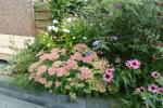 Bloemen bakken