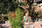 b & B tuin groningen