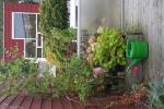daktuin in groningen