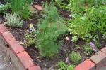 kruiden in de tuin