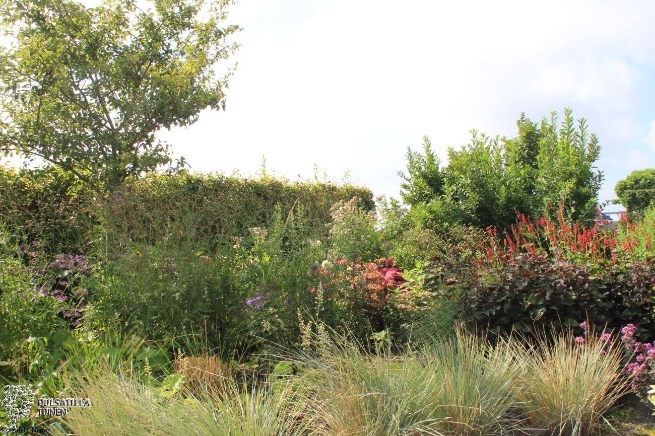 Prairieplantenborder