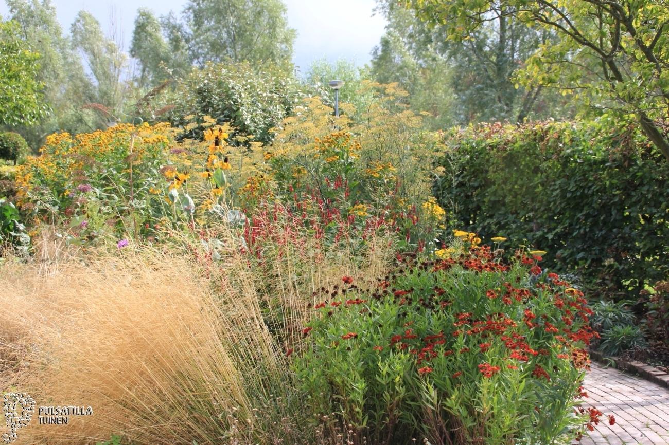 Roodgele prairieplanten grassenborder
