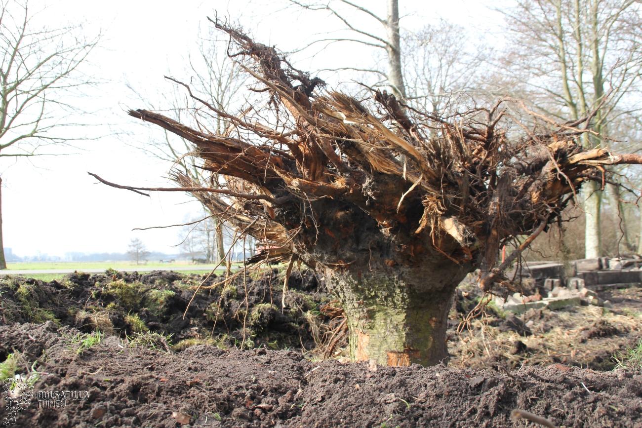 boomstronk ondersteboven