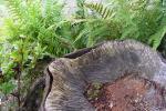 schaal in stam tuinbeeld