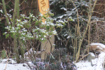 stam_met_wormgang in prunushout tuinbeeld