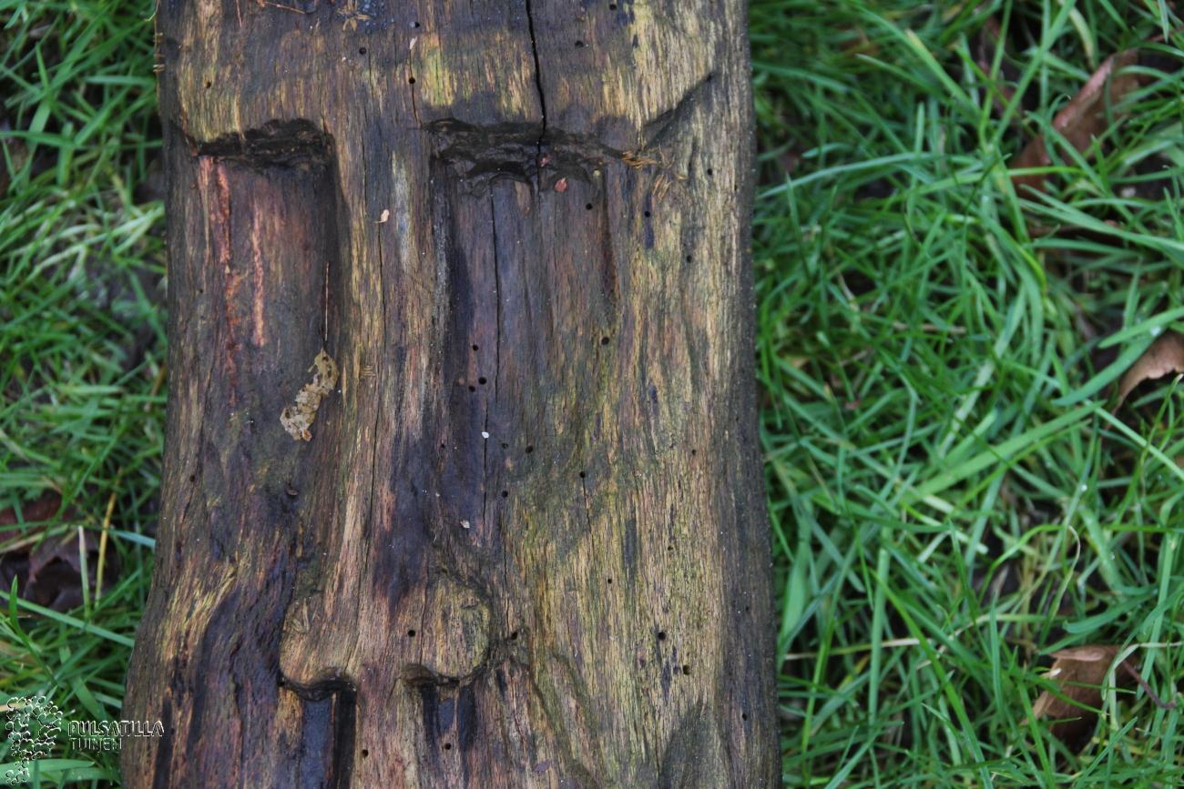 houten klaas beuk tuinbeeld