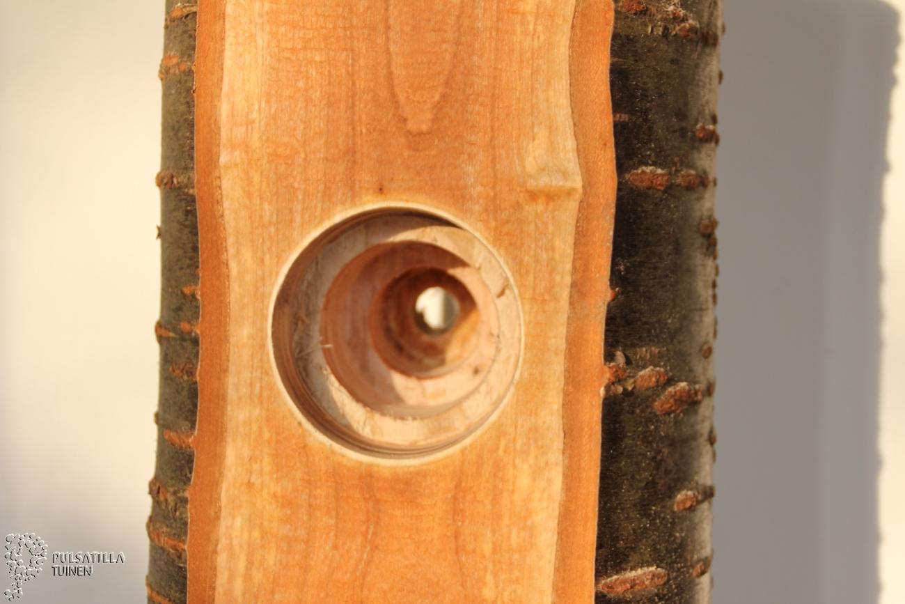 stam_met_gat kersenhout