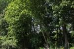 hoge_bomen-smalle_tuin