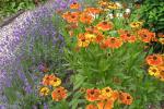 veel kleuren bloemen border