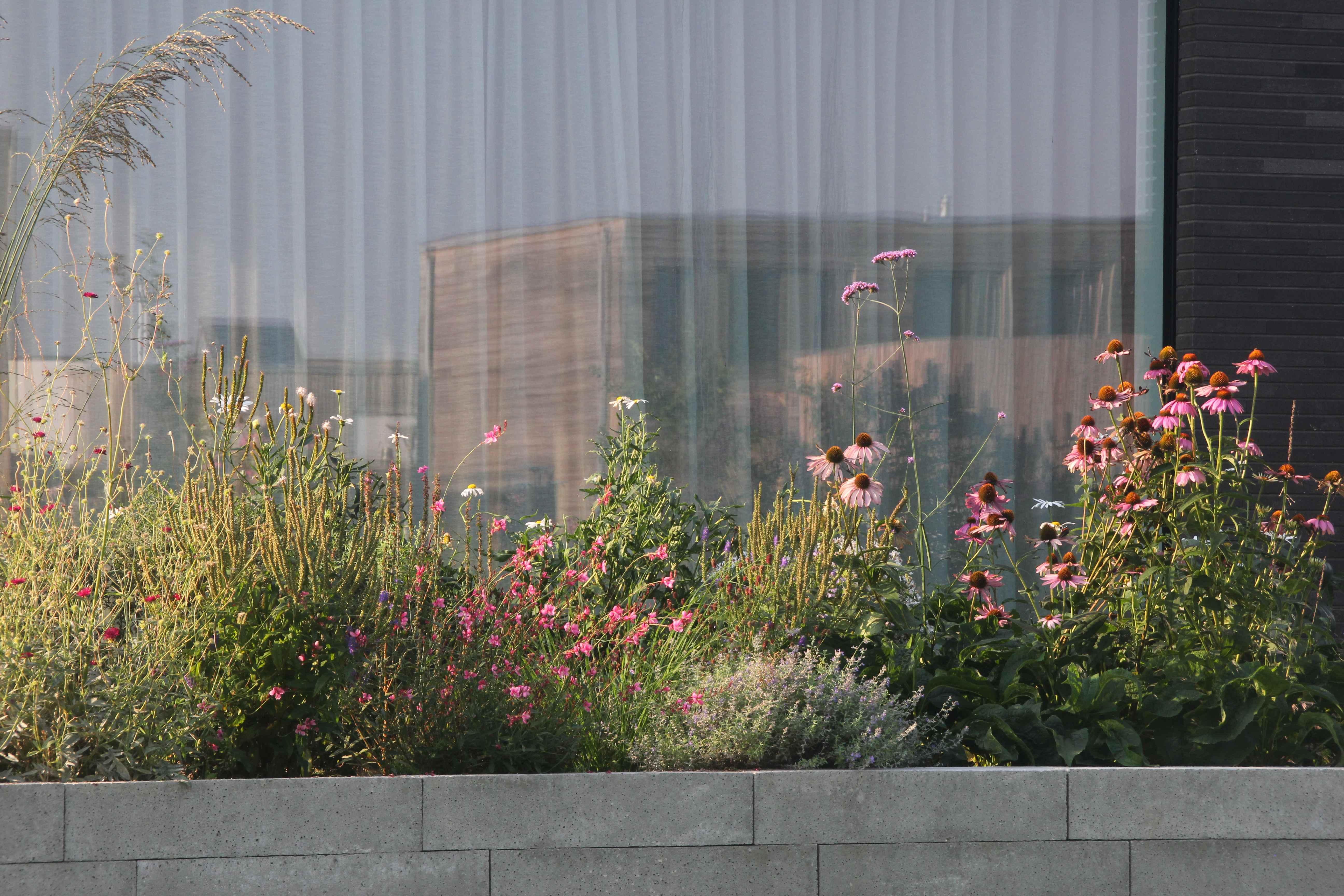 bloemenborder-voor-raam