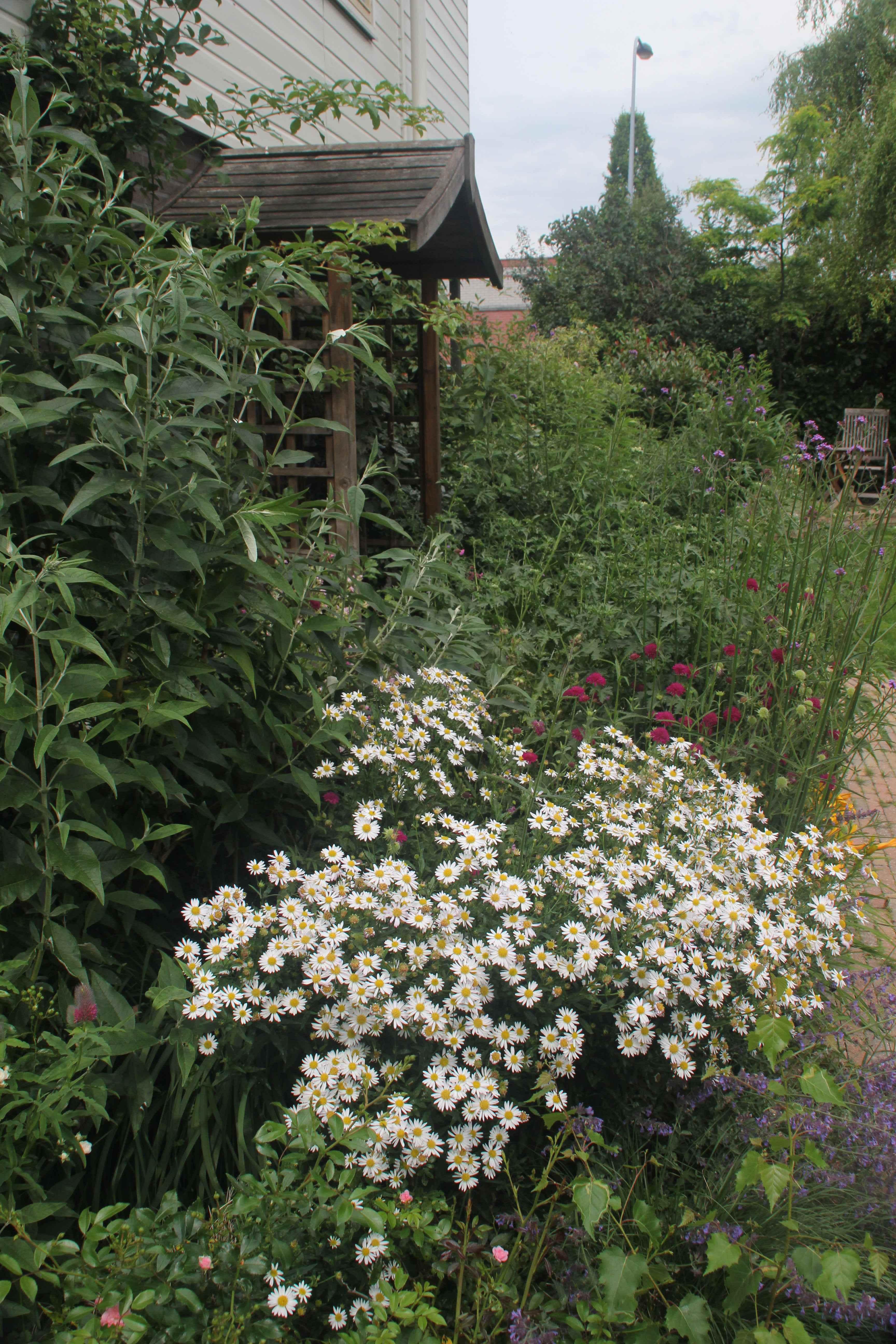 zitje-achter-de-bloemen